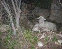 Presepe Vivente - 26 dicembre 2008  - Balata di baida (2474 clic)