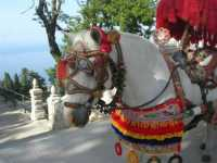 folclore: cavallo bardato di un carretto siciliano - 22 maggio 2009   - Erice (6232 clic)