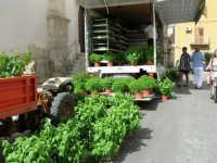 si vende il basilico in Piazza della Repubblica - 18 giugno 2006  - Alcamo (1068 clic)