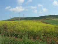 la campagna a primavera - impianto eolico - 3 maggio 2009  - Fulgatore (1625 clic)
