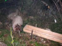 Presepe Vivente - 26 dicembre 2008  - Balata di baida (2345 clic)