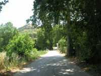 sulla strada che porta a Calatafimi - 28 giugno 2009  - Segesta (1785 clic)