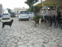 cani . . . in piazza - 11 ottobre 2009   - Scopello (1742 clic)