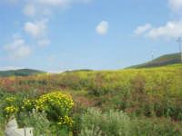 la campagna a primavera - impianto eolico - 3 maggio 2009  - Fulgatore (1703 clic)