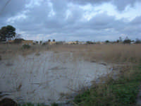 campi allagati dopo la pioggia della notte precedente - 1 febbraio 2009   - Marsala (5004 clic)