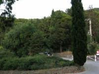 Monte Bonifato: la pineta - 19 luglio 2005   - Alcamo (1687 clic)