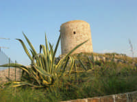 Torre - 25 aprile 2007  - Isola delle femmine (1529 clic)