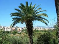 panorama della periferia . . . con palma - 9 maggio 2007  - Alcamo (1137 clic)