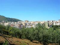 uliveto e panorama della periferia - 9 maggio 2007  - Alcamo (897 clic)