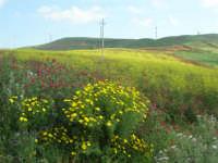 la campagna a primavera - impianto eolico - 3 maggio 2009  - Fulgatore (1510 clic)
