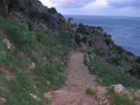 sentiero e panorama - 1 gennaio 2009  - Riserva dello zingaro (3235 clic)