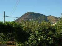 Il monte Bonifato deturpato dall'incendio di pochi giorni prima - 17 agosto 2005  - Alcamo (1783 clic)