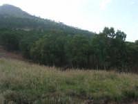 pineta in montagna - 12 giugno 2007  - Castellammare del golfo (933 clic)