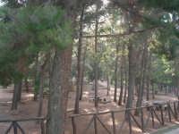 l'area attrezzata del Belvedere - 12 giugno 2007  - Castellammare del golfo (2886 clic)