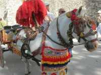 folclore: carretto siciliano - 22 maggio 2009   - Erice (2560 clic)