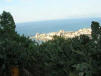 piante di ficodindia, panorama della città e del golfo - 12 giugno 2007   - Castellammare del golfo (709 clic)
