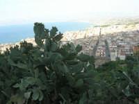 piante di ficodindia, panorama della città e del golfo - 12 giugno 2007   - Castellammare del golfo (796 clic)
