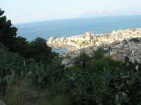piante di ficodindia, panorama della città e del golfo - 12 giugno 2007   - Castellammare del golfo (860 clic)