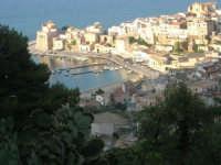 piante di ficodindia e panorama della città - 12 giugno 2007   - Castellammare del golfo (696 clic)