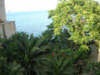 vista dal ponte: il verde ed il mare - 12 giugno 2007   - Castellammare del golfo (658 clic)