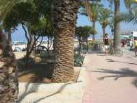 giardino pubblico sulla spiaggia - 21 agosto 2009  - San vito lo capo (1460 clic)