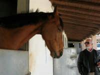 C.da Valle Nuccio - Visita al maneggio de Lo Sperone - 19 febbraio 2006   - Alcamo (1163 clic)