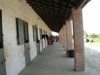 C.da Valle Nuccio - Visita al maneggio de Lo Sperone - 19 febbraio 2006   - Alcamo (1194 clic)