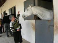 C.da Valle Nuccio - Visita al maneggio de Lo Sperone - 19 febbraio 2006   - Alcamo (1264 clic)