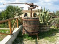 C.da Valle Nuccio - Visita al maneggio de Lo Sperone - Lu strincituri (attrezzo usato nella vendemmia) - 19 febbraio 2006   - Alcamo (2689 clic)
