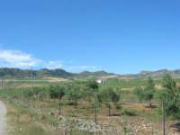 campagna nei pressi di Gibellina: sulle colline le pale eoliche - 17 giugno 2007  - Gibellina (2458 clic)