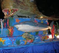 Carnevale: martedì grasso - 28 febbraio 2006  - Balestrate (2002 clic)