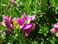 fiori del nostro giardino - 24 aprile 2006  - Alcamo (1155 clic)
