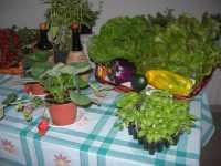 I.C. Pascoli - Progetto PON - per una corretta alimentazione - 20 maggio 2009  - Castellammare del golfo (2263 clic)