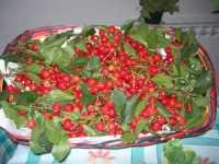 I.C. Pascoli - Progetto PON - per una corretta alimentazione - 20 maggio 2009  - Castellammare del golfo (2259 clic)