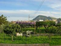 Periferia e Monte Bonifato - 20 aprile 2005  - Alcamo (2245 clic)