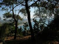 Panorama del Golfo di Castellammare dallo Zoo Fattoria - 15 luglio 2005  - Terrasini (2208 clic)