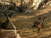 Animali ospiti dello Zoo Fattoria - 15 luglio 2005  - Terrasini (16937 clic)