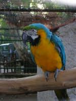 Animali ospiti dello Zoo Fattoria: pappagallo - 15 luglio 2005  - Terrasini (2328 clic)