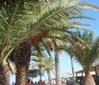 giardino pubblico ai bordi della spiaggia - 30 agosto 2008  - San vito lo capo (604 clic)