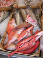 piazza Mercato - Pescheria del sig. Randazzo: pesci vari per la zuppa - 17 luglio 2007  - Alcamo (2310 clic)