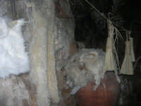Il Presepe Vivente di Custonaci nella grotta preistorica di Scurati (grotta Mangiapane) (221) - 26 dicembre 2007   - Custonaci (1241 clic)