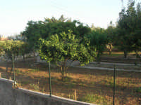 giardino - al centro un piccolo arancio - 30 settembre 2007  - Alcamo (990 clic)