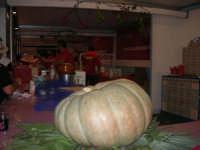 Cous Cous Fest 2007 - Villaggio gastronomico: dove si serve il cou cous di San Vito Lo Capo (particolare: grande zucca) - 28 settembre 2007   - San vito lo capo (1007 clic)