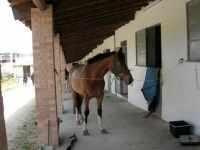 C.da Valle Nuccio - Visita al maneggio de Lo Sperone - 5 marzo 2006   - Alcamo (1281 clic)