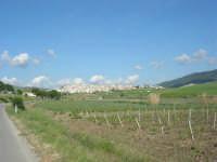 sulla strada che porta a Sambuca di Sicilia - 25 aprile 2008   - Sambuca di sicilia (1869 clic)