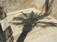 acciottolato dinanzi il Santuario di Maria SS. di Custonaci (con l'ombra di una palma) - 6 settembre 2007  - Custonaci (1270 clic)
