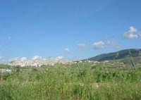 sulla strada che porta a Sambuca di Sicilia - 25 aprile 2008   - Sambuca di sicilia (1704 clic)