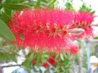fiore del giardino accanto - 4 maggio 2006  - Alcamo (1190 clic)