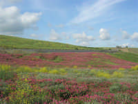 i colori della campagna siciliana a primavera - 25 aprile 2008   - Poggioreale (3009 clic)