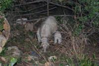 Presepe Vivente - 26 dicembre 2008  - Balata di baida (2189 clic)
